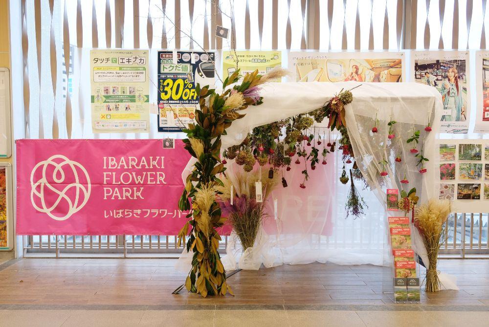 JR水戸駅&石岡駅でフラワーパークを体感!いばらき秋季観光キャンペーンスタート